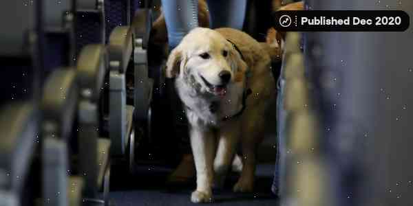 US airlines to ban emotional support animals from flights